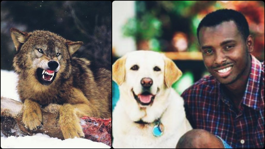 The Dog And The Wolf As A Litmus for Northern and Southern Nigeria